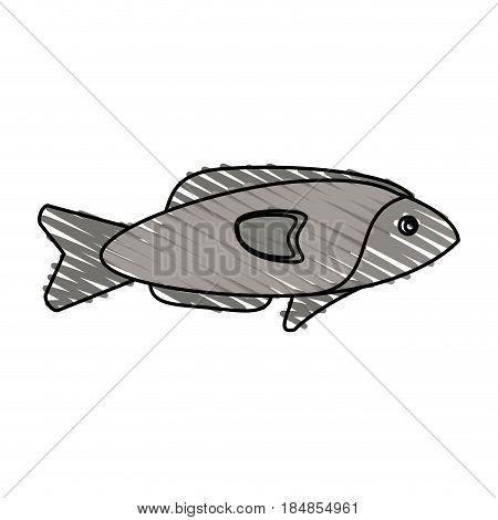 color crayon stripe fish aquatic animal vector illustration