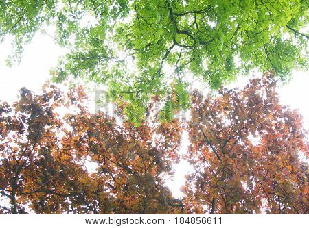 Low angle view on coloured leaves in forest