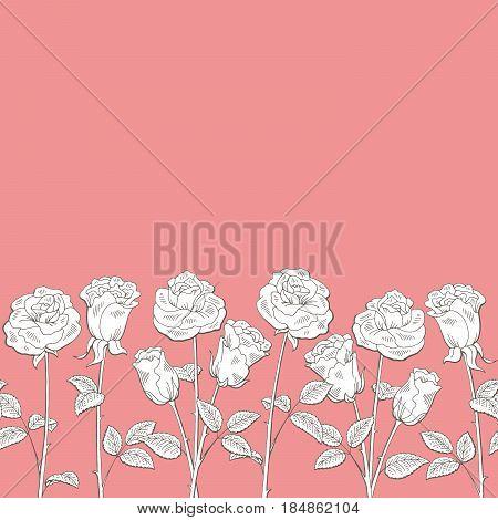 Rose flower graphic pink color seamless background sketch illustration vector