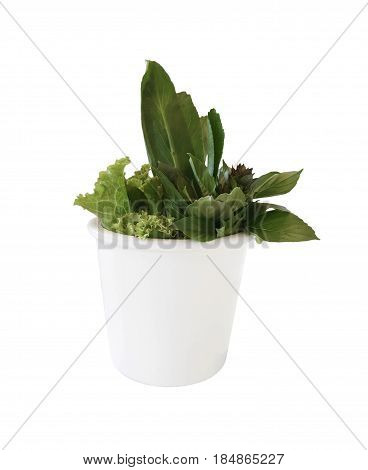 Tropical Thai herb vegetables in white vase isolated on white background