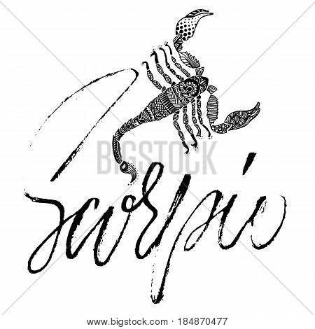 Zodiac sign of Scorpio. Astrology vector illustration. Sketch isolated on white background. Handwritten lettering design