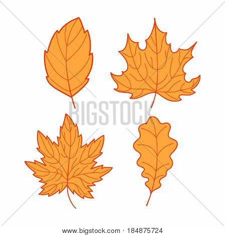 Collection of orange leaves on a white background, colorful autumn leaves set, hand-drawn leaves tree decoration art, EPS 8