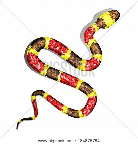 Vector 3d Illustration of Coral Snake or Micrurus Isolated on White Background. Serpent with Red Brown and Yellow Stripes