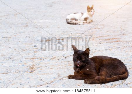 Black and white resort cats basking in sun in beach village Bali. Cute fluffy Pets on vacation. Rethymno Crete Greece