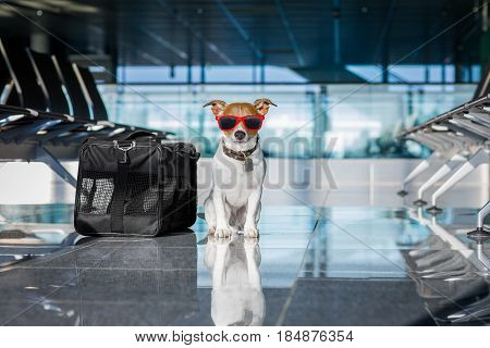 Dog In Airport Terminal On Vacation