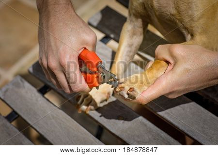 Cutting Dog Nails With Clipper
