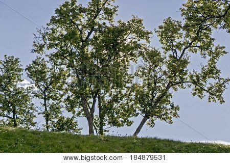 Norway, Tromso  Trees near the cathedral. Nature Norway.
