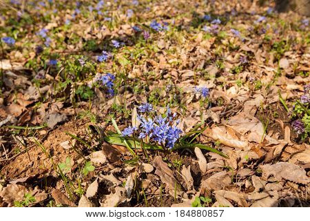 Spring Flowers Nature