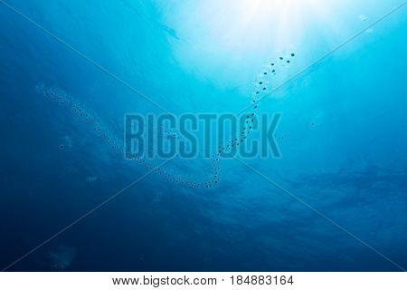 Plankton The Travler Of The Sea
