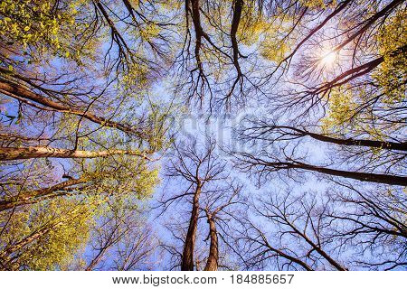 Forest Tree Branches Blue Sky