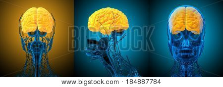 3d rendering medical illustration of the brain