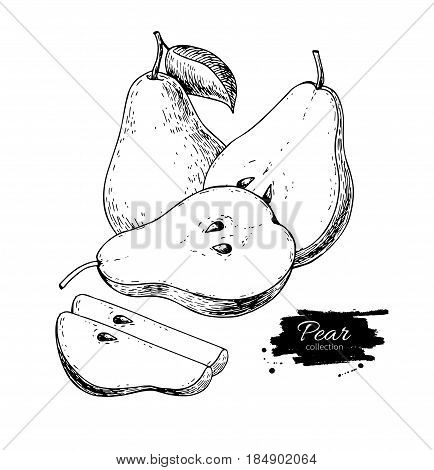 Pear vector drawing. Isolated hand drawn pear and sliced pieces.  Summer fruit engraved style illustration. Detailed vegetarian food sketch. Great for label, poster, print, menu