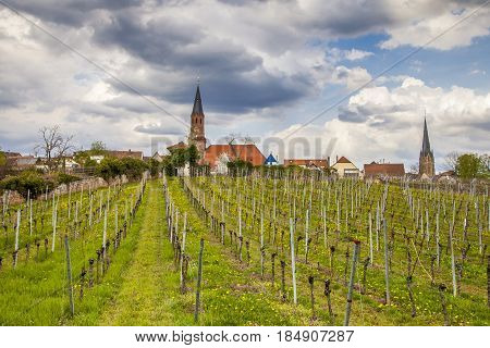 Wine Country Landscape In Edenkoben District Of Southern Wine Route Germany