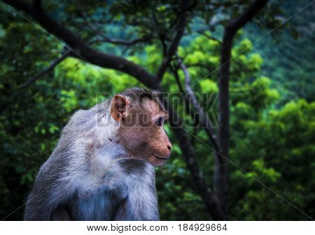 Picture of a Monkey Taken At Tamil Nadu Before Sunrise