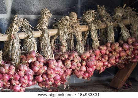 shallot / The shallot is a type of onion specifically a botanical variety of the species Allium cepa.