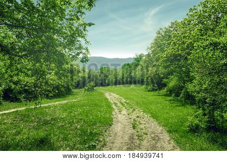 Country landscape dirt road in the forest glade sunny summer day. Gelendzhik North Caucasus Russia