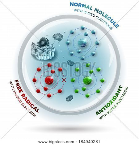 Human Cell And Free Radical, Andtioxidant And Normal Molecules