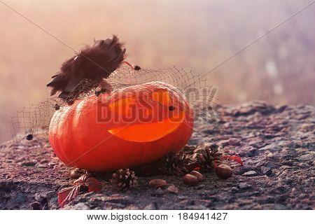 the halloween funny orange  pumpkin close-up outdoor