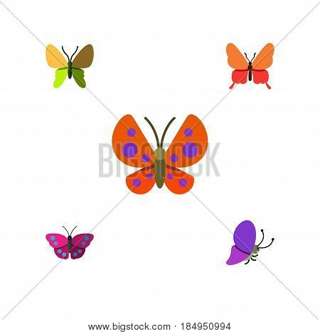 Flat Moth Set Of Moth, Beauty Fly, Summer Insect And Other Vector Objects. Also Includes Butterfly, Moth, Archippus Elements.