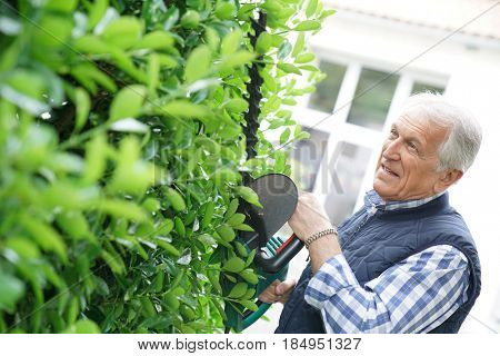 Senior man using hedge trimmer