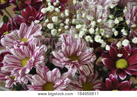 Multi color bouquet with such flower as dahlia and chrysanthemum