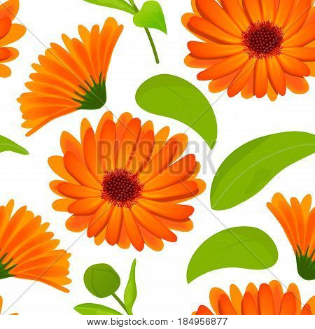 Calendula flower seamless pattern vector. marigold. Botanical herb isolated on white. Flowers with leaves. Herbal medicine plant for skin and hair care, cosmetics, ointments, perfumery, decoration