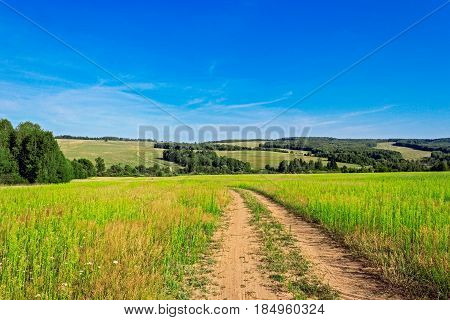 A dirt road in the field on a summer day