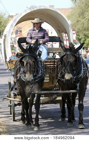 FORT WORTH, TEXAS, MARCH 15. The Fort Worth Stockyards on March 15, 2017, in Fort Worth, Texas. A Covered Wagon Mule Team and Driver at the Fort Worth Stockyards historic district in Fort Worth, Texas.