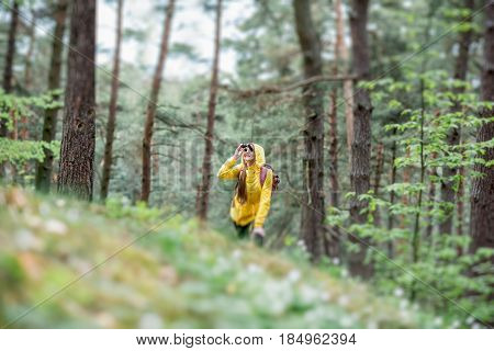 Landscape view on the pine forest with woman hiking in yellow raincoat