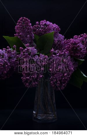 Syringa vulgaris in a vase isolated on a black background Shallow depth of field low key selective focus dramatic effect