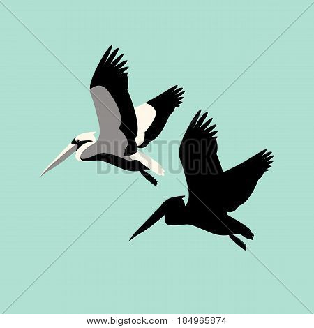 Pelican vector illustration style  Flat silhouette black