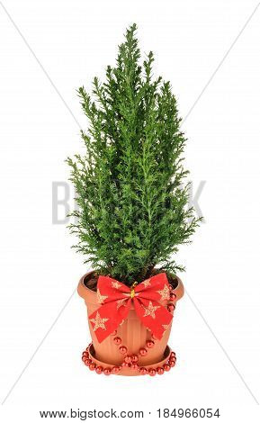 Christmas Tree Isolated On White. Without Shadow
