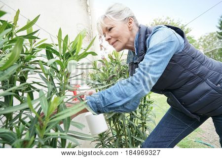 Senior woman in garden spraying insecticide over plants