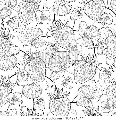 Vector seamless pattern with outline Strawberry with berry, flowers and leaf in black on the white background. Floral background with Strawberry in contour style for summer design and coloring book.