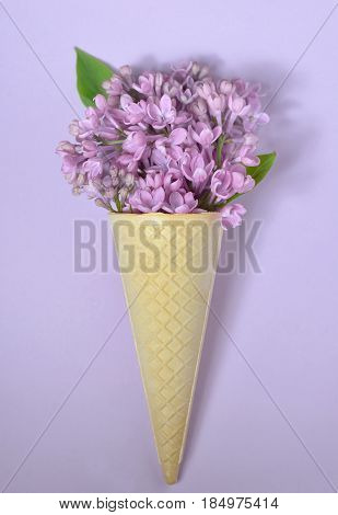lilac in cone on paper background, close up