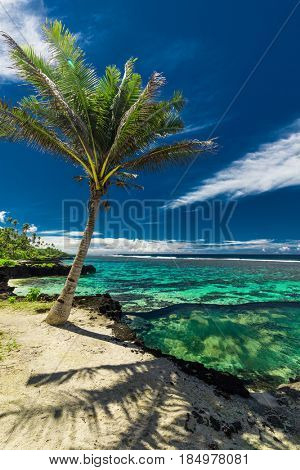 Natural infinity rock pool with palm trees over tropical ocean lagoon, Samoa