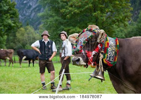 Steeg, Austria -  september 17, 2016; farmers with decorated cows at the Almabtrieb in Steeg, Austria