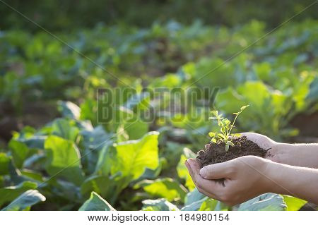 Soil cultivated dirt earth ground agriculture land background Nurturing baby plant on handOrganic gardening agriculture. Nature closeup and selective focus.