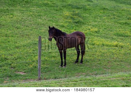 Brown horse with black hair in a lush green field