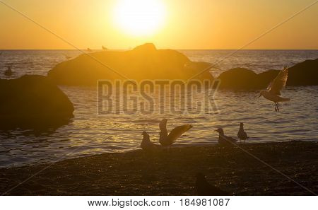 Sunrise over the sea with stones and flying seagulls. Pacification and happyness concept