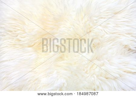 Texture of a white unshaved sheepskin. Natural sheepskin.