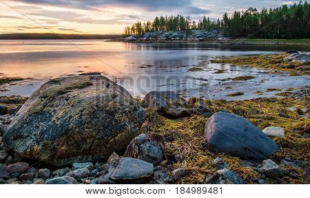 Landscape on sunset with algae rocks and trees on the beach of White Sea Russia