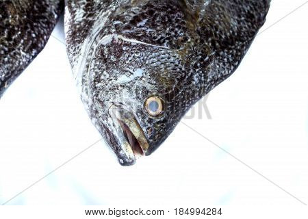 Fish head on white background. Sea fish head closeup with gills and scale texture. Grey and silver scale. Seafood photo banner template for restaurant menu. Raw fisherman's catch for lunch cooking