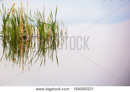 Reflection of Grass, Early in a Morning