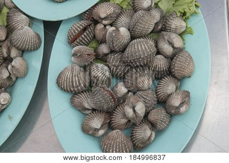 Thai food - fresh blood cockle (or also known as blanched clam) from the sea in the seafood market ready to be grilled
