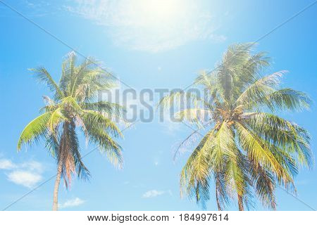 Tropical island palm tree scene. Bright blue sky background. Summer vacation banner template. Fluffy palm tree with green leaves. Coconut palm under sunlight. Exotic nature holiday postcard view