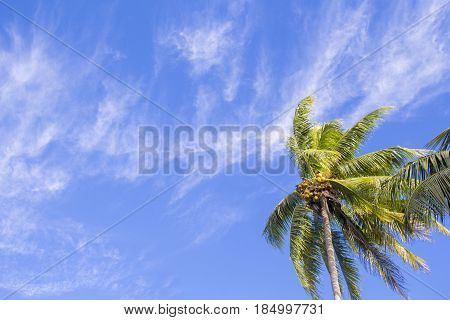 Single palm tree on tropical island. Bright blue sky background. Summer vacation banner template. Fluffy palm tree with green leaves. Coconut palm under sunlight. Exotic nature holiday postcard view