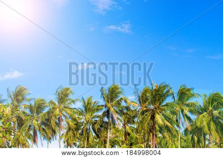 Green palm tree skyline on tropical island. Blue and sunny sky. Summer vacation banner template. Fluffy palm tree with green leaves. Coconut palm under sunlight. Exotic nature holiday postcard view