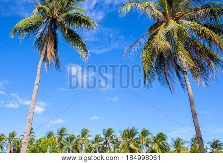 Tropical landscape with blue sky and coco palm trees. Exotic place view through palm tree silhouettes. Palm tree forest under sunlight. Peaceful paradise image for poster or card. Coconut palm crowns