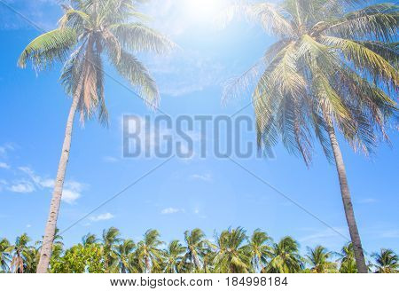 Exotic palm tree on tropical island. Sun flare on blue sky background. Summer vacation banner template. Fluffy palm tree with green leaves. Coconut palms under sunlight. Exotic nature relaxing view